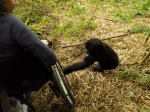 baby gorilla touching my spoke guard.jpg